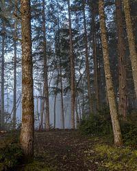 Trail in fog
